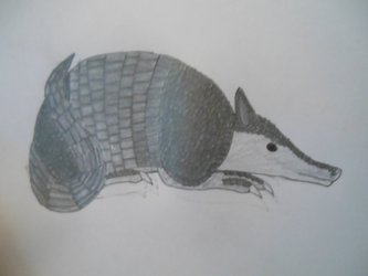 First armadillo drawing in color