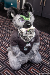FurDU 2018: Zander with his Bone