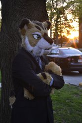 Business Professional Kitty 3