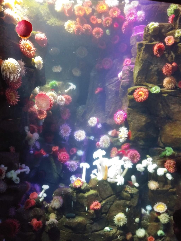 Garden under the sea