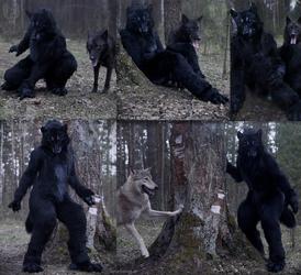 Black Wolf Nachtzeit rebirth.