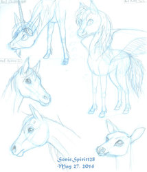 Agrippa, Dash, Some Horses, and a Deer