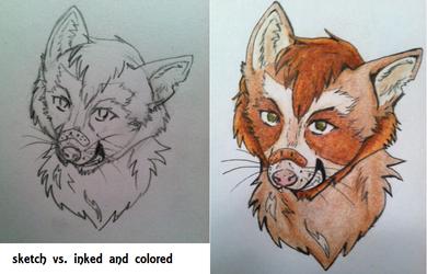 Cinnamon Raccon - Sketch vs. Colored