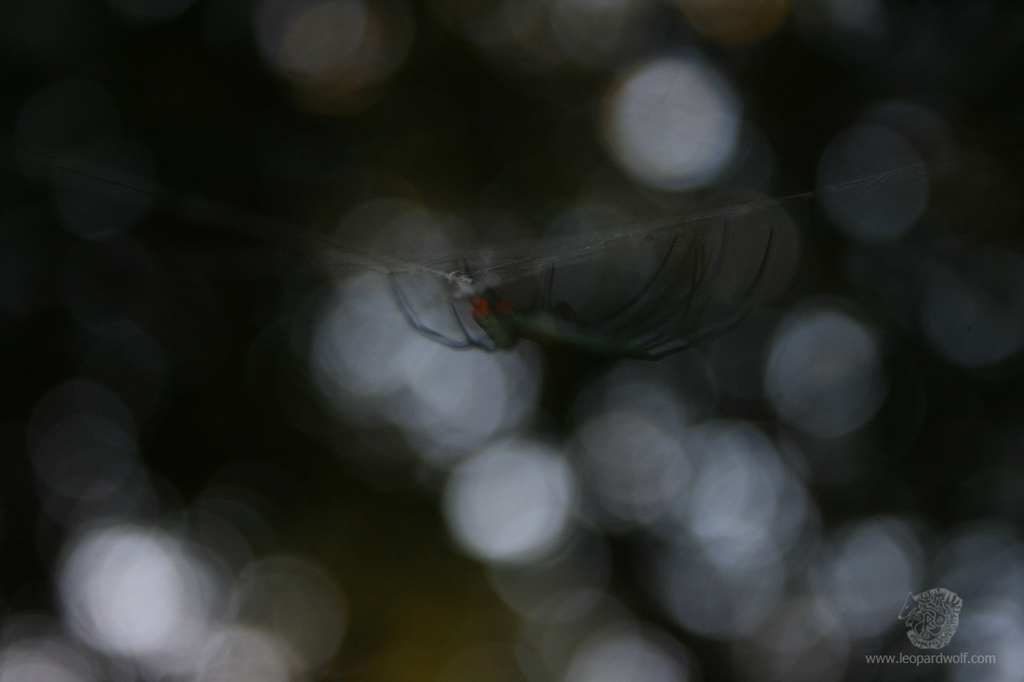 Featured image: Spooky Orchard Spider 2