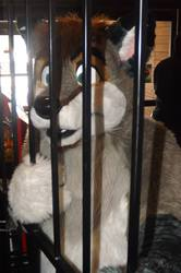 Furry Meet Pictures 14 (Part 61)