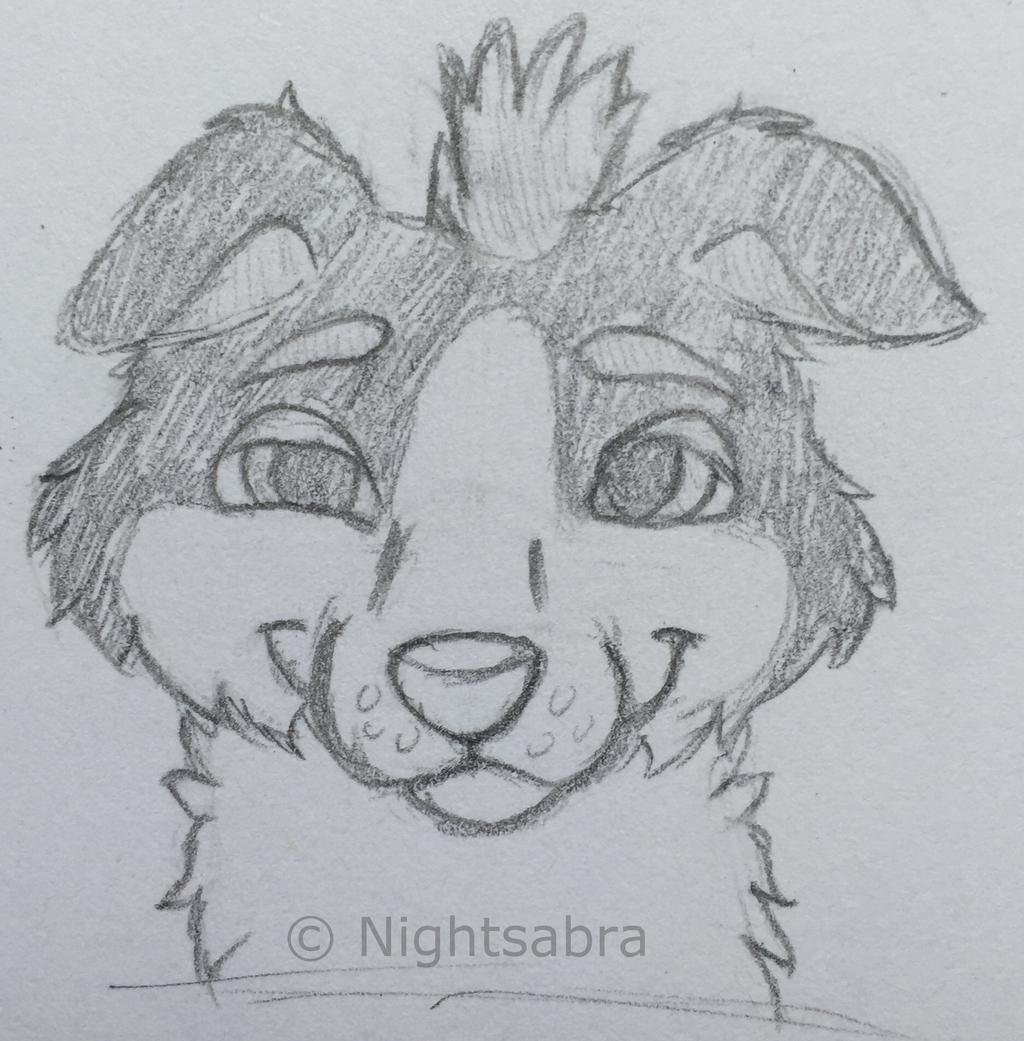 Collie Headshot Sketch