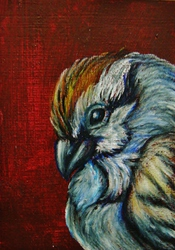 ACEO--Chipping Sparrow