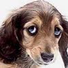avatar of Dogson