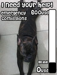 Emergency comissions Help our lil buddy