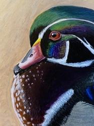 Wood Duck WIP
