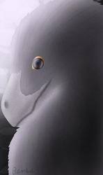 Raven of Dakota
