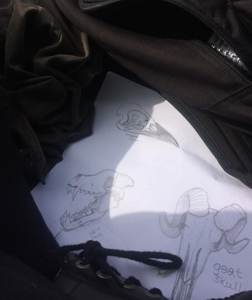 Animal Skull Doodles