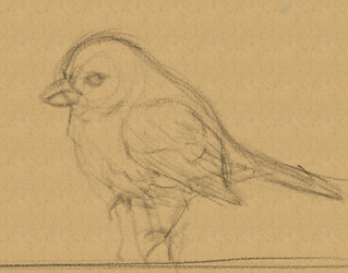 Biiirdy Sketch