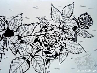 [Indian Ink art] Roses ...