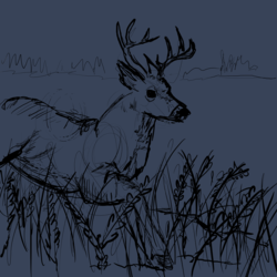 I have an obsession with deer