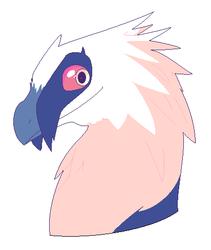 bearded vulture gal