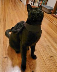 Errol the Bat Cat