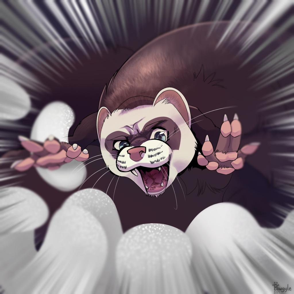 ferret attack