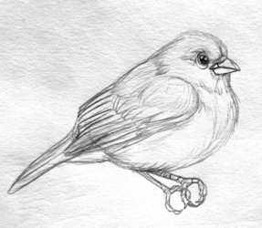 Bunting Sketch