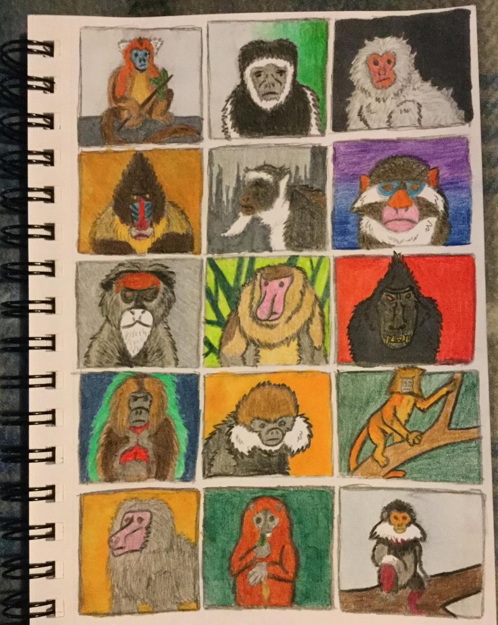 Old World Monkey Thumbnails
