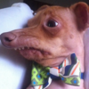avatar of GenesisFuz