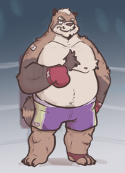Tanuki Boxer