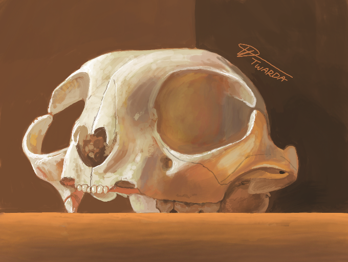 Sketchy Skull [3DS]
