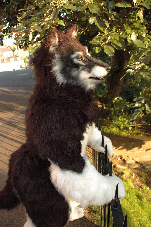 Profile of a werewolf