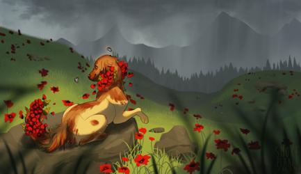 [com] poppies