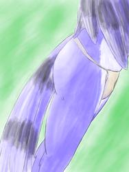 Blue Jay Butt