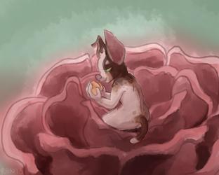 The Rose Chihuahua