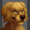 avatar of jey_golden_retriever