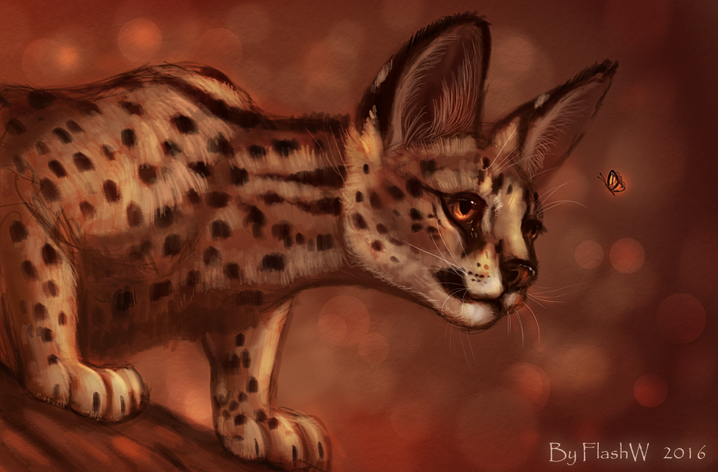 Little serval