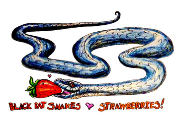 Black Rat Snakes and Strawburs
