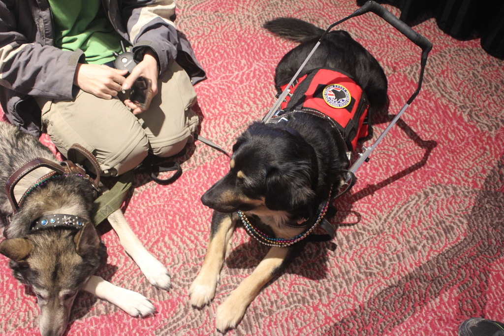 Texas Furry Fiesta 2016 - Service dogs