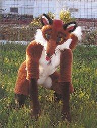 Red Fox setting pretty.