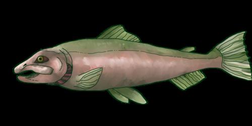 Salmon Skaetch