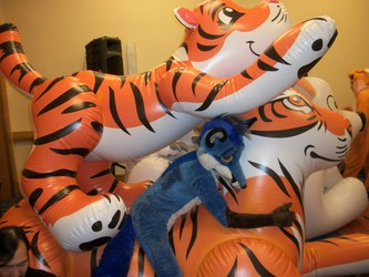 Blue Fox and the inflatable tigers.