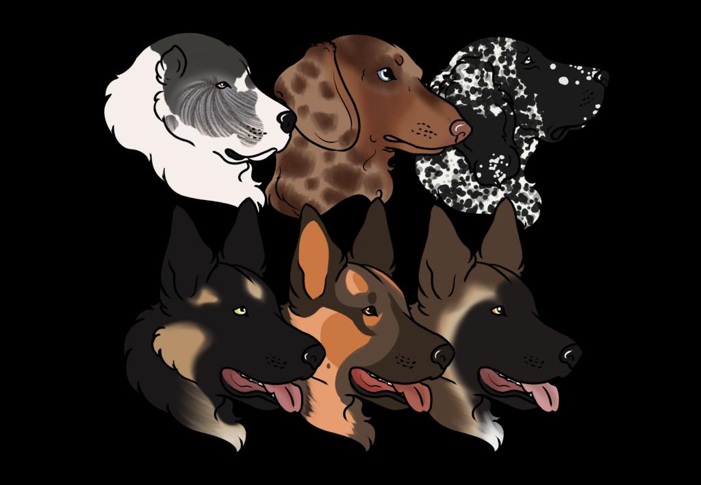 Phantom Eclipse RNG Dog Show Entries(1)