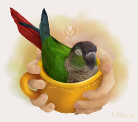 A Cup of Conure