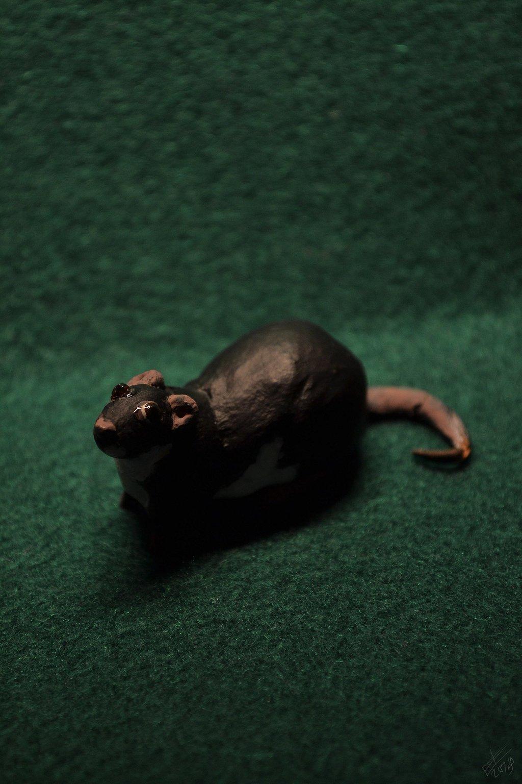 Poor little rat