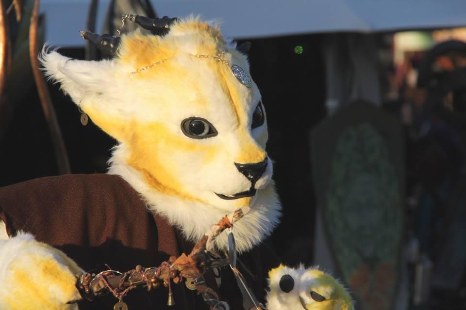 Most recent image: Sun Cat