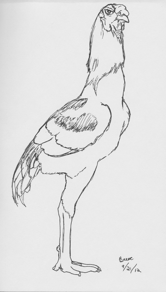 Most recent image: Shamo Rooster