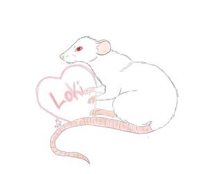 My rat Loki