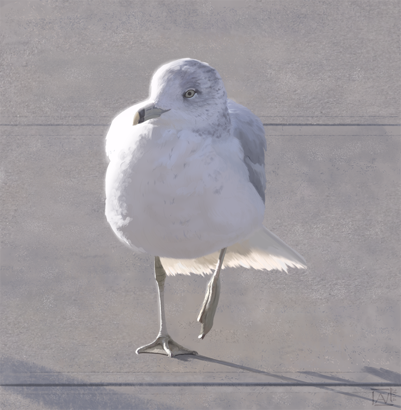 Seagull Strut