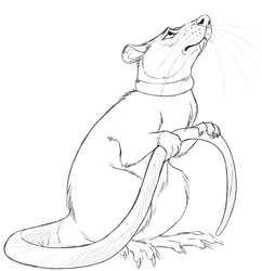 Sandow Com Rat