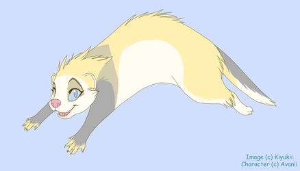 Lin the Ferret