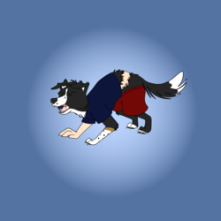 bcollie TF
