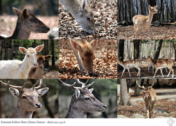 Fallow Deer reference pack