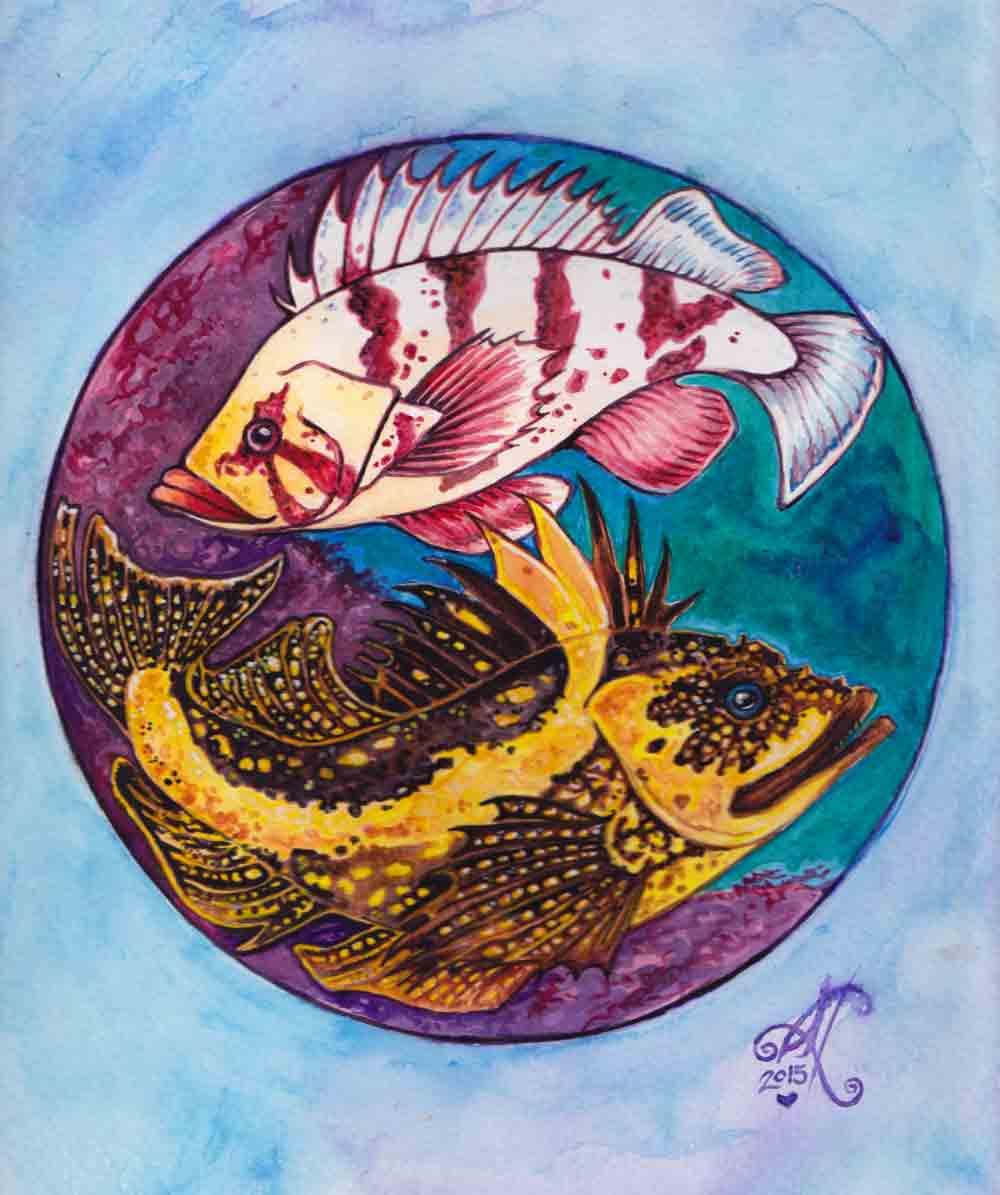 Tiger Rockfish and China Rockfish